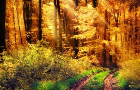 森林,黄色的太阳,秋天,草,树木,灌木,路,3440x1440风景高端电脑桌面壁纸