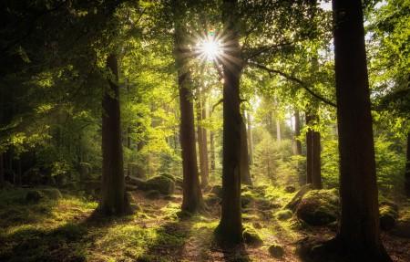 阳光透过树林4k风景高端电脑桌面壁纸