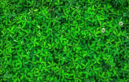 绿叶植物护眼3440x1440高端电脑桌面壁纸