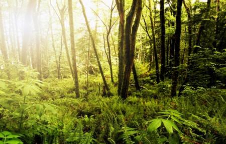 华盛顿州的森林3840x2160风景高端电脑桌面壁纸