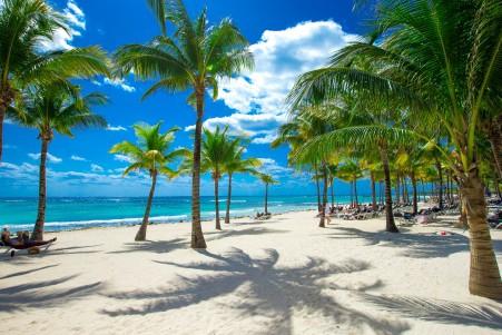 美丽的沙滩,海滩,海岸,棕榈树,5K风景高端电脑桌面壁纸