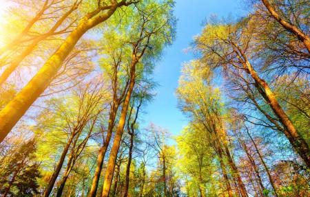 森林,秋天,树枝,天空,树,太阳,高清4K风景超高清壁纸精选