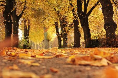 树木 大道 秋季 秋天树叶 叶子 4K风景高端电脑桌面壁纸