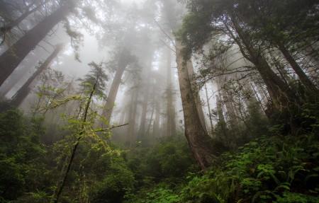 加州 红木天堂3840x2160风景高端电脑桌面壁纸