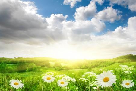 花 雏菊 天空 云 阳光 草地 7K风景高端电脑桌面壁纸