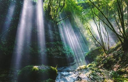 森林 树木 山谷 阳光 岩石 苔藓 4K风景高端电脑桌面壁纸3840x2160