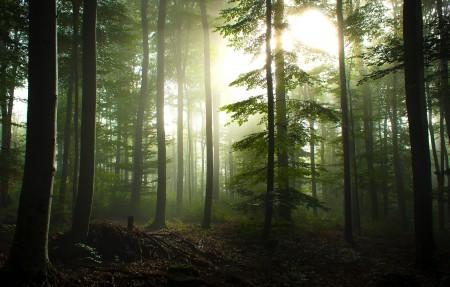 德国瓦尔登布赫 斯图加特附近的森林 早晨雾 3840x2160风景高端电脑桌面壁纸