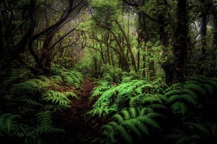 森林 叶子 灌木 树木 蕨类植物 人行道 4K风景高端电脑桌面壁纸