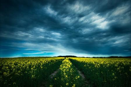 安静的田野 油菜花 天空 4K风景超高清壁纸精选