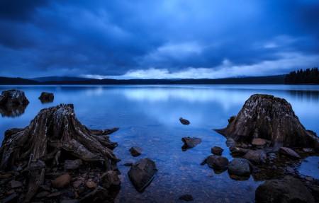 俄勒冈州 森林 湖 树桩 4K风景超高清壁纸精选