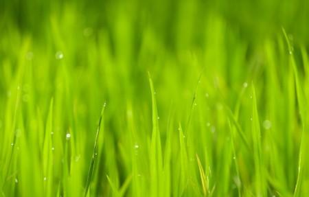 自然 特写 户外 绿色 水稻 叶子 露珠 4K护眼高端电脑桌面壁纸3840x2160