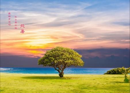 树 海 草 海洋 景观 处暑4K高端电脑桌面壁纸