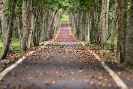 树林 道路 落叶 自然 树木 5K风景高端电脑桌面壁纸