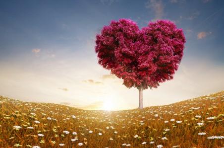 情人节 爱心红叶树 草地 唯美 七夕 浪漫 4K高端电脑桌面壁纸