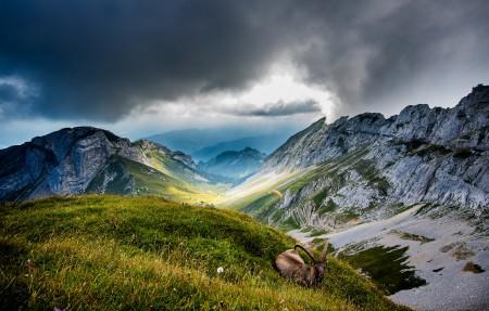 瑞士皮拉图斯山 山羊 4K风景高端电脑桌面壁纸 3840x2160