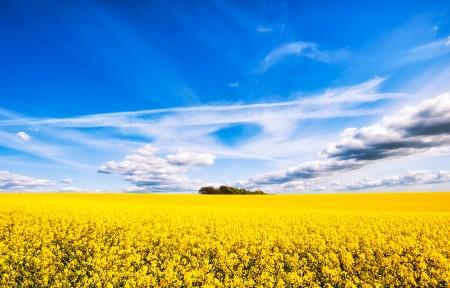 油菜花的天空4K高清风景高端电脑桌面壁纸