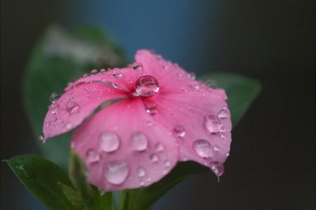 水滴 鲜花 雨 自然 粉红色花瓣 4K高端电脑桌面壁纸
