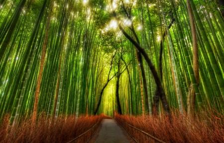 日本京都竹林3440x1440风景高端电脑桌面壁纸