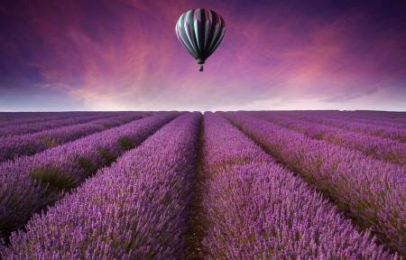 紫色花海 热气球 薰衣草庄园 4K风景高端电脑桌面壁纸
