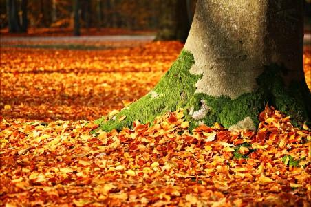 秋天的落叶 苔藓 树 秋季 叶子 森林 4K风景高端电脑桌面壁纸