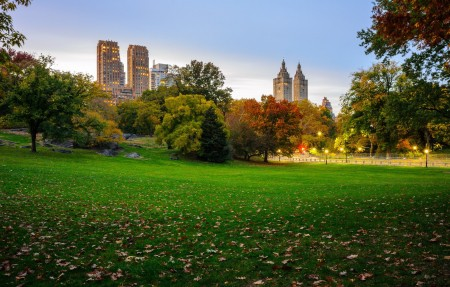 秋天,叶子,树,美国纽约中央公园,草坪,4K风景高端电脑桌面壁纸