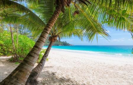 夏天 沙滩 大海 海水 棕榈树 海滩 岛屿 4K风景高端电脑桌面壁纸