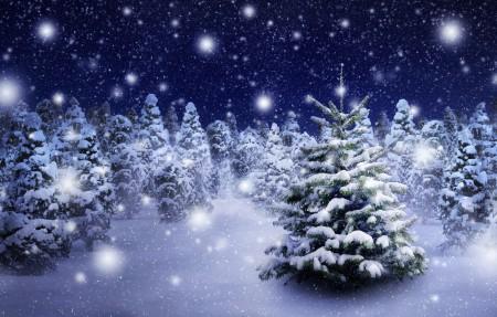 冬季 树 飘雪 5K风景高端电脑桌面壁纸