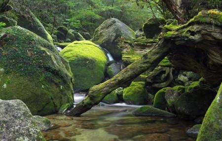 日本屋久岛 森林 小溪 石头 风景4K高端电脑桌面壁纸