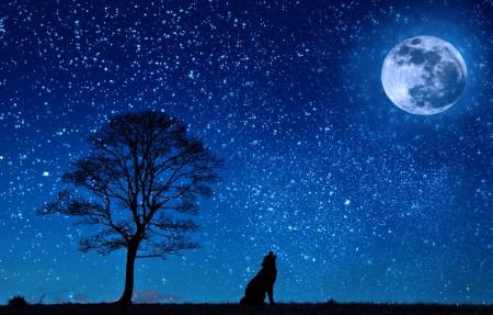 狗 狼 月球 树 夜 繁星点点的天空 剪影 草地 4K风景高端电脑桌面壁纸