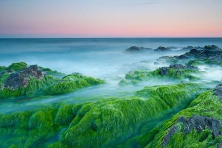 海洋 岩石 绿色海藻4K高端电脑桌面壁纸