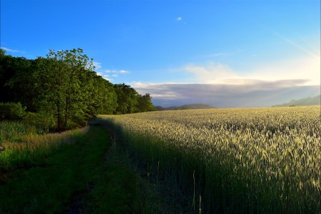 阳光 日出 原野 草甸 自然 树 天空 4K风景高端电脑桌面壁纸