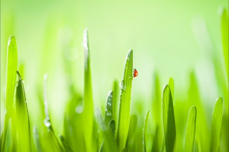 自然 绿草 水滴 4K护眼超高清壁纸精选