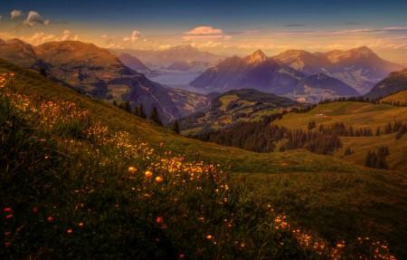 瑞士 高山 森林 田野 草地 风景4K高端电脑桌面壁纸