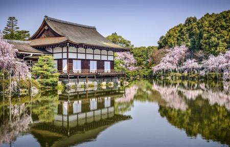 平安神宫 日本京都 花 池塘 4K风景高端电脑桌面壁纸