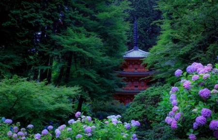 日本京都 公园 绿色树木 灌木 绣球花 塔 4K风景高端电脑桌面壁纸