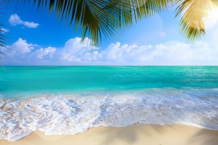 夏季 海滩 棕榈树 大海 海岸 4K风景高端电脑桌面壁纸