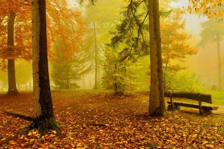秋天的树木风景4K高端电脑桌面壁纸