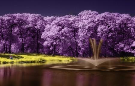 树 湖 紫色风景 唯美艺术 4K高端电脑桌面壁纸