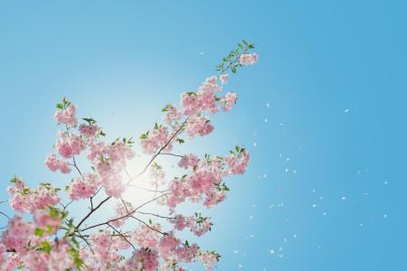 天空 樱花 6K风景高端电脑桌面壁纸
