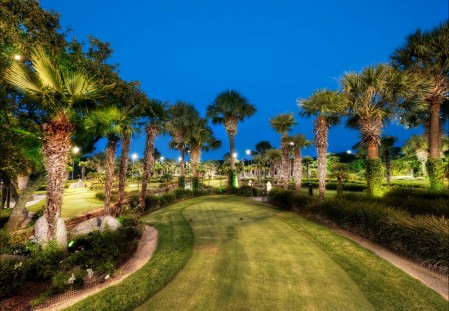 夜晚 公园 棕榈树 草坪 4K风景高端电脑桌面壁纸
