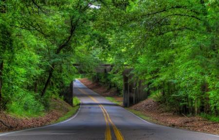 绿色树林 乡村道路 4K风景护眼高端电脑桌面壁纸
