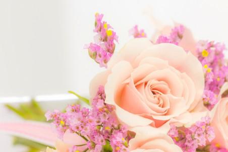玫瑰花朵5K超高清壁纸精选