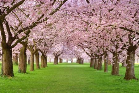 春天开花 树 粉红色花瓣 胡同 4K风景高端电脑桌面壁纸