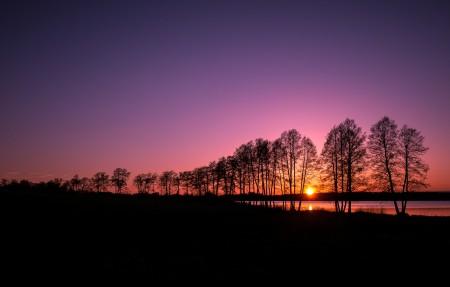 树剪影 芬兰 美丽的夕阳4K风景超高清壁纸精选