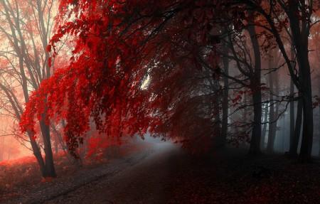 秋天森林 红色树叶 5K风景高端电脑桌面壁纸