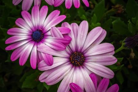 美丽 盛开 鲜花 叶子 自然 4K高端电脑桌面壁纸