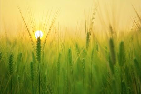 大麦场 日出 早晨 太阳 云 天空 美丽风景4K高端电脑桌面壁纸