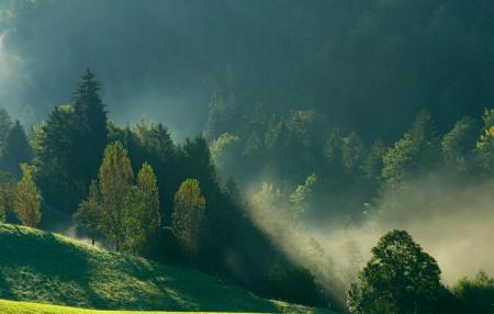 雾 早晨 山 树林 自然风景6K高端电脑桌面壁纸