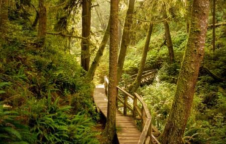 温哥华岛 太平洋沿岸国家公园保护区 美丽的森林风景4K高端电脑桌面壁纸