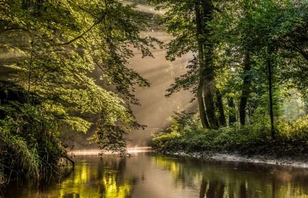 丛林 森林 阳光 河流 自然风景4K高端电脑桌面壁纸